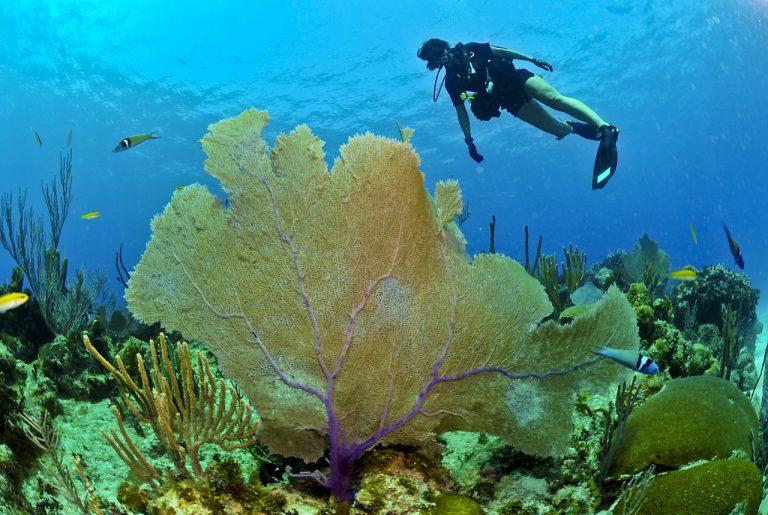 מתחת למים, צלילה, אילת, שוניות האלמוגים, מצפה תת ימי