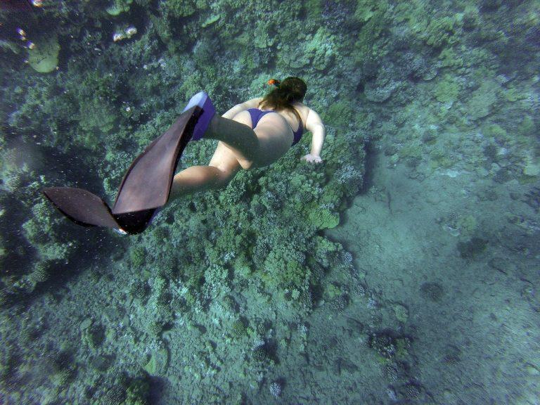 שנורקלינג בשוניות האלמוגים באילת
